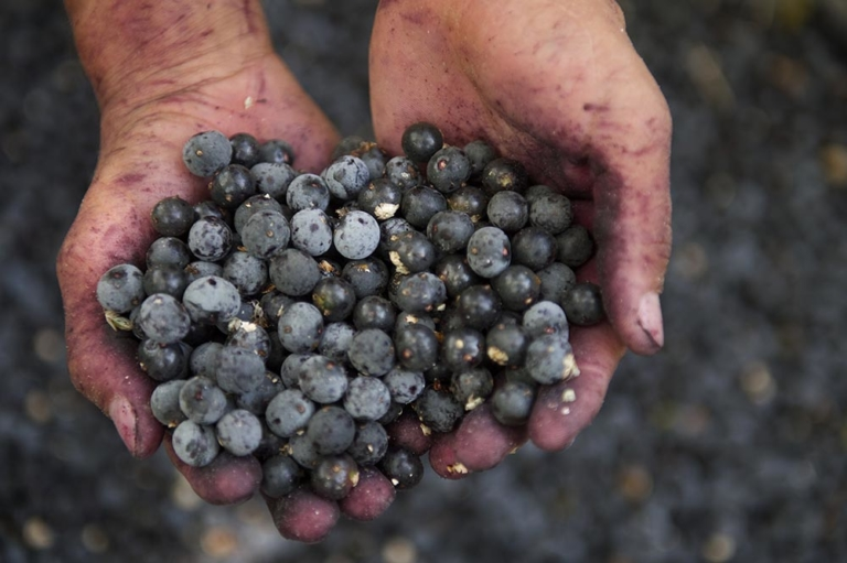 Why Acai Berries Should Be in Your Diet
