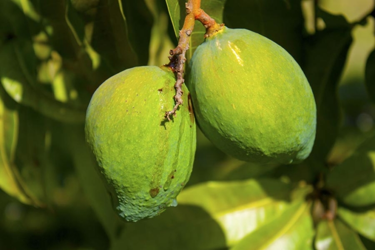 What Is African Mango?